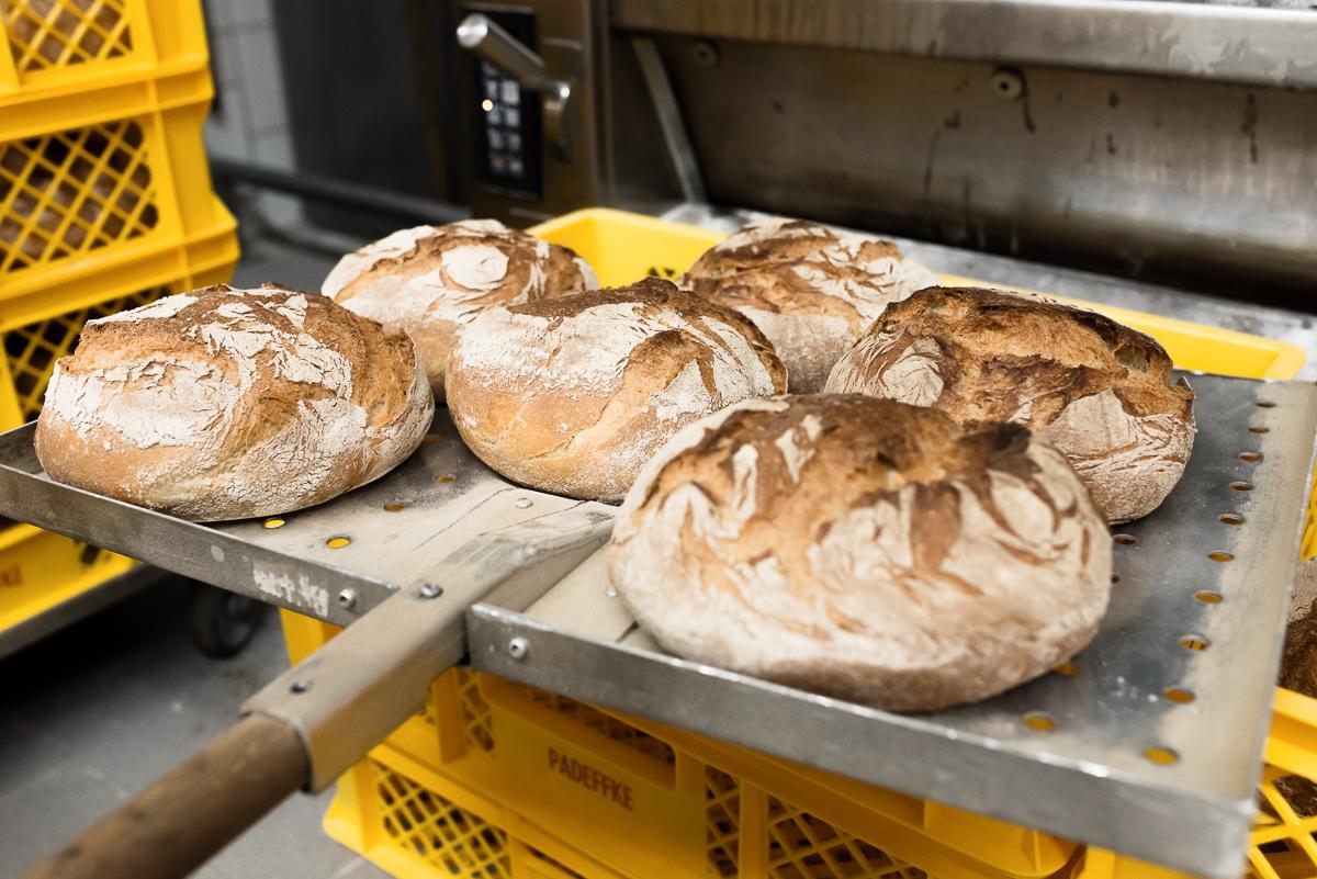 Frische Brotlaibe in der Bäckerei Padeffke